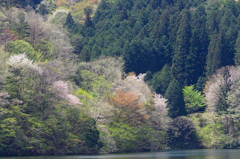 Mikawako2