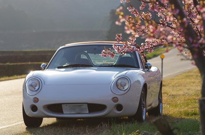 Sakura71