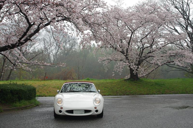 Sakura2017048j1