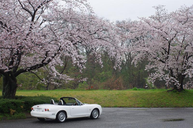 Sakura2017048k1