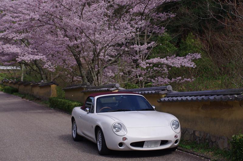 Sakura20170412g5a
