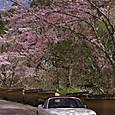 Sakura20170412fa