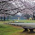 Sakura2017048a